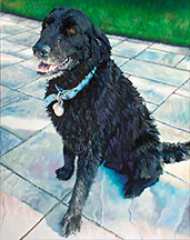 Black Dog Image